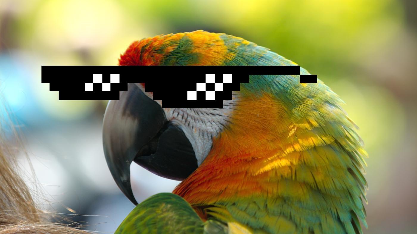 Az éneklő rocker papagájt hallanod kell!