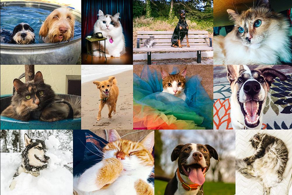 Hivatalos: ebben különböznek a kutyás és macskás emberek