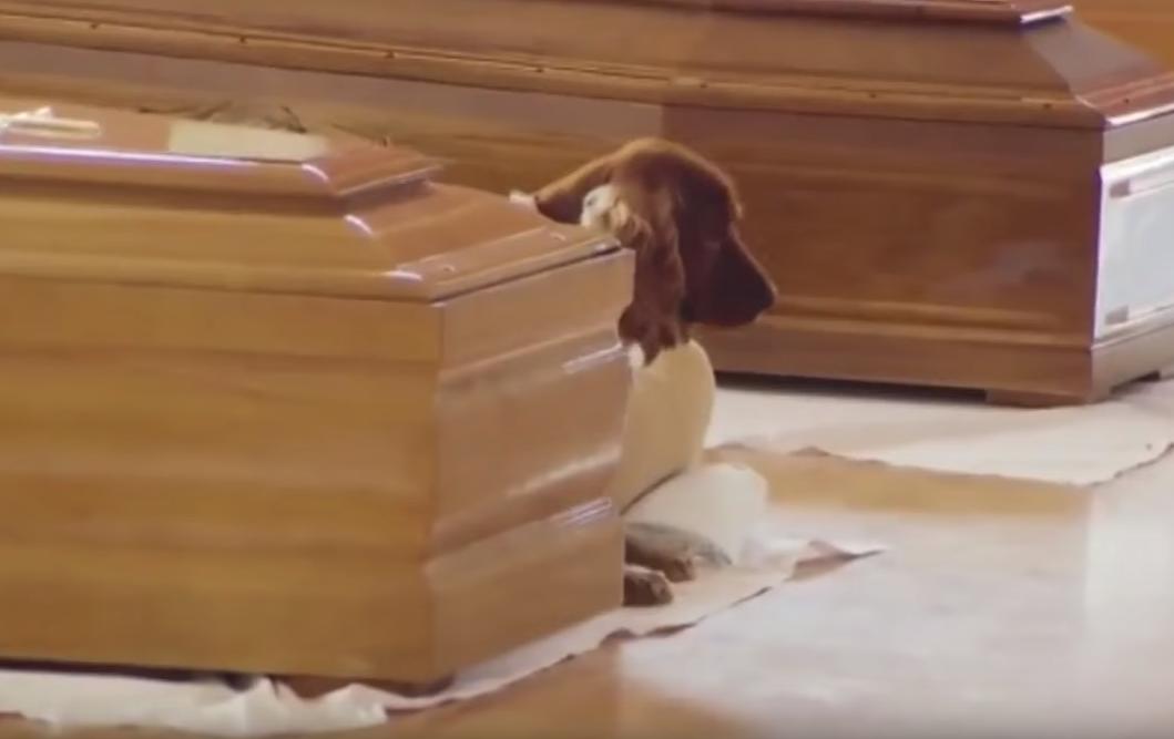 Megrázó videó: a földrengés áldozatának koporsója mellől nem tágított a kutyája