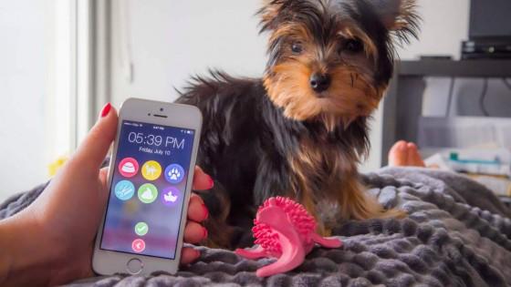 Ez az app szól, ha nem etetted meg a kutyád - fókusz