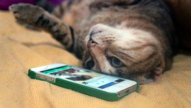 Lekapcsolja a Vine videós szolgáltatást a Twitter